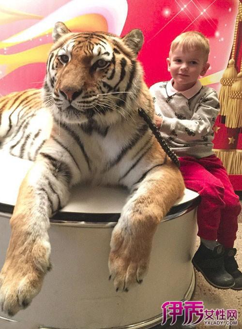 家庭养老虎当宠物|老虎能当宠物养吗危险吗
